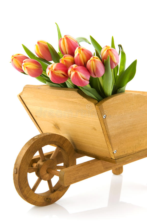 tulipanu wheelbarrow obrazy stock
