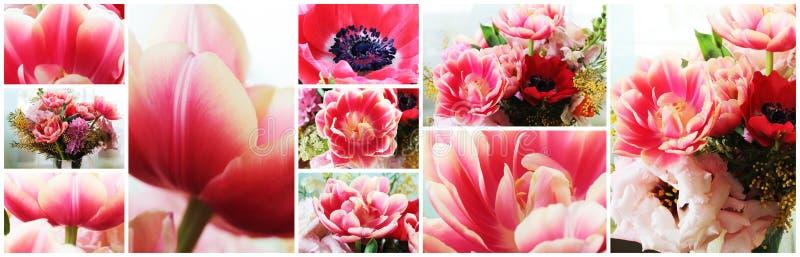 Tulipanu zamknięty up makro- kolaż zdjęcia royalty free