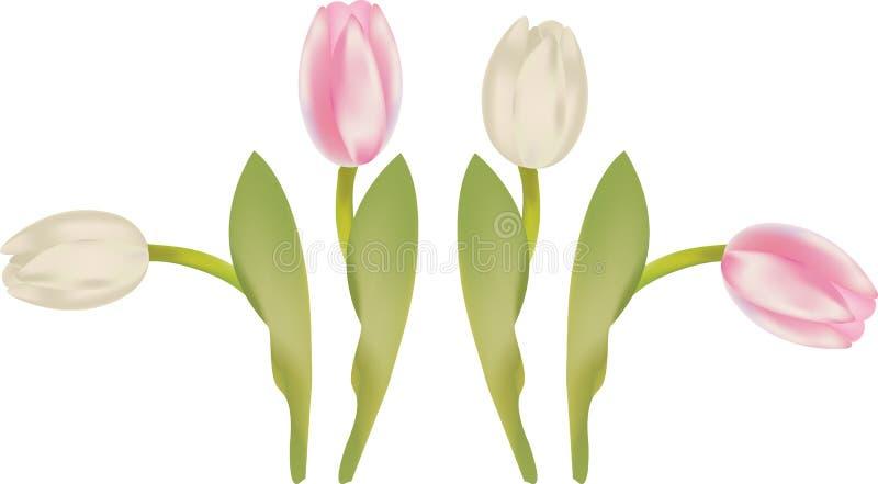 tulipany royalty ilustracja