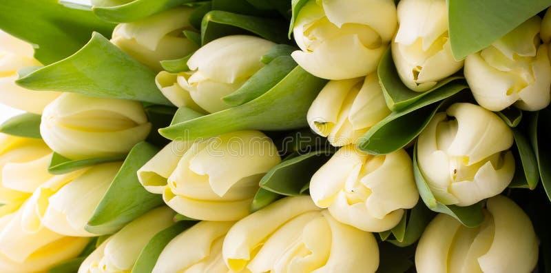Tulipany. zdjęcie royalty free