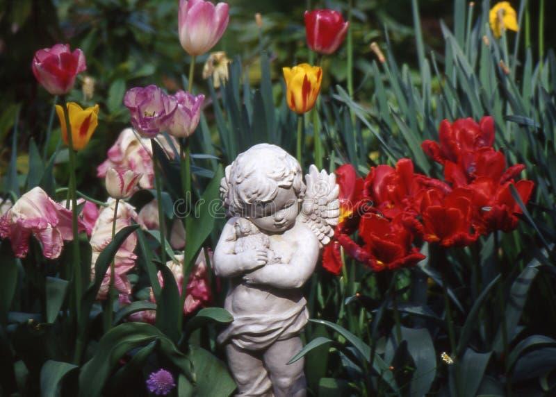 tulipany aniołów zdjęcie royalty free