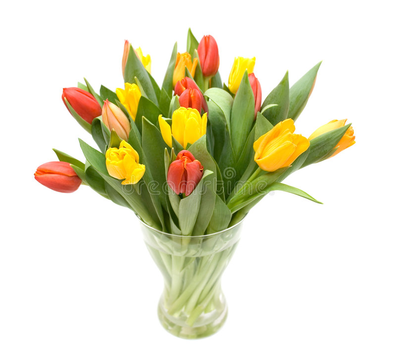 tulipany barwna zdjęcia royalty free