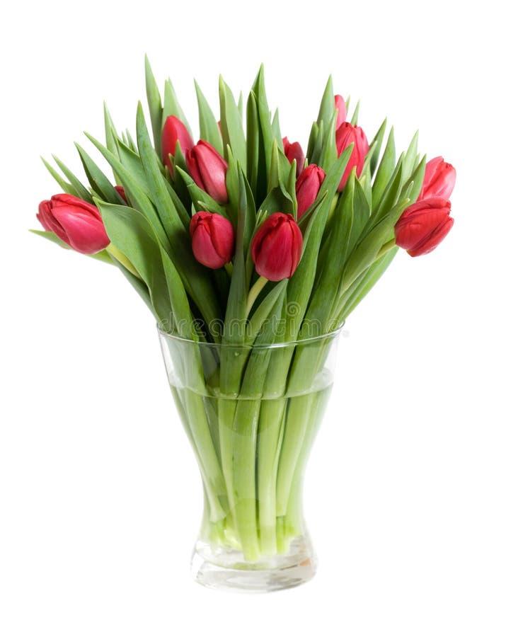 tulipany czerwone zdjęcia royalty free