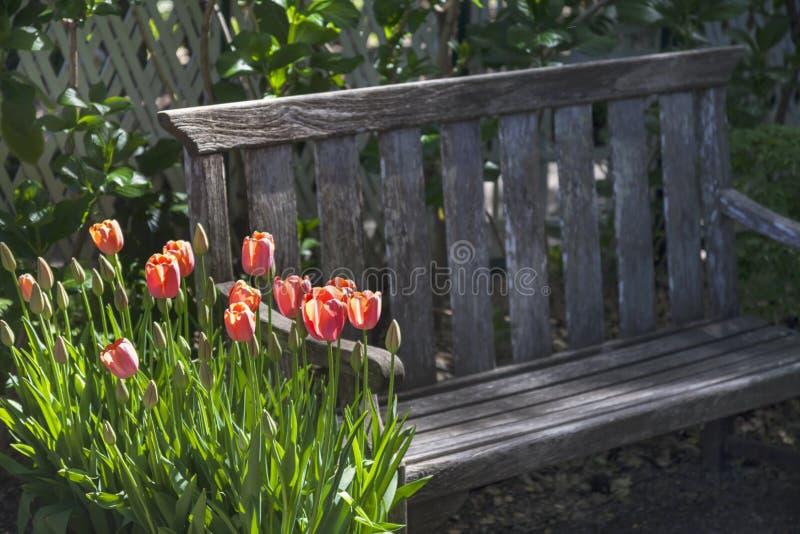 Tulipany i ławka obraz stock