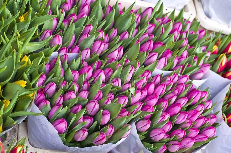 Tulipany przy kwiatu rynkiem w Amsterdam. zdjęcie royalty free