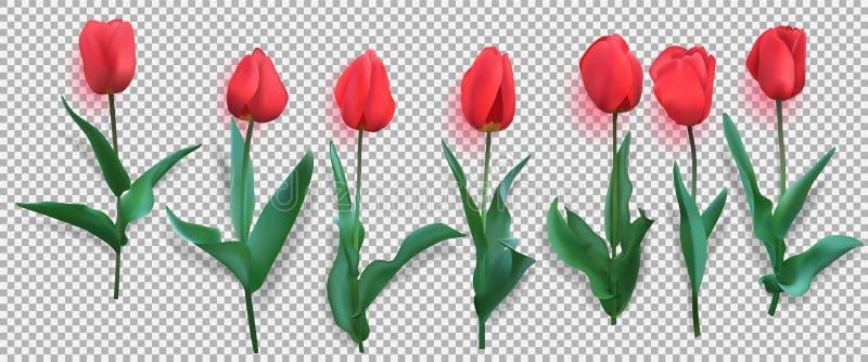 Tulipany Realistyczni czerwoni tulipany z liśćmi i cieniem Set siedem odosobniony również zwrócić corel ilustracji wektora ilustracja wektor