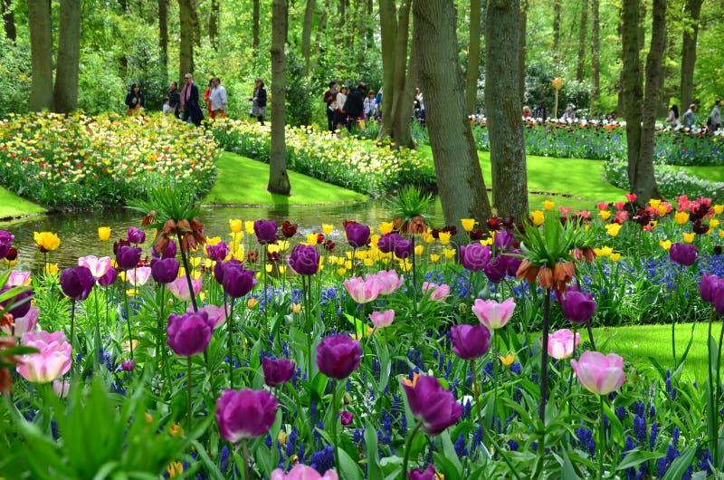Tulipany w wiośnie pod jaskrawym słońcem w ogródzie Keukenhof, holandie obraz royalty free