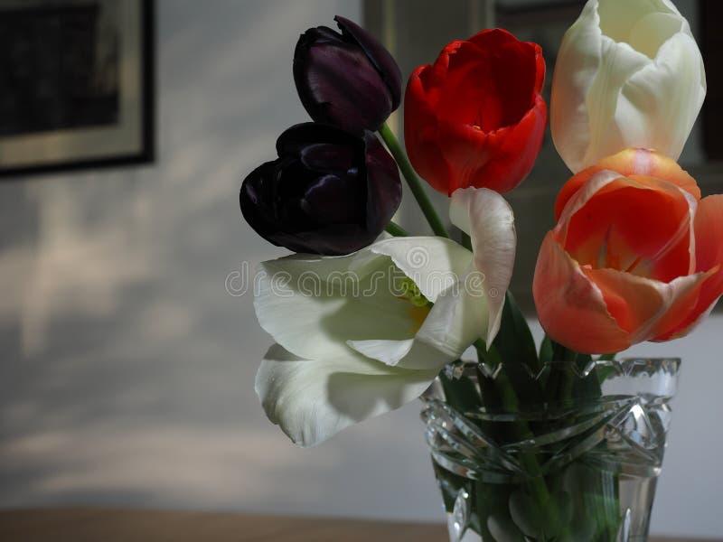 tulipany wazowi żyje fotografia royalty free