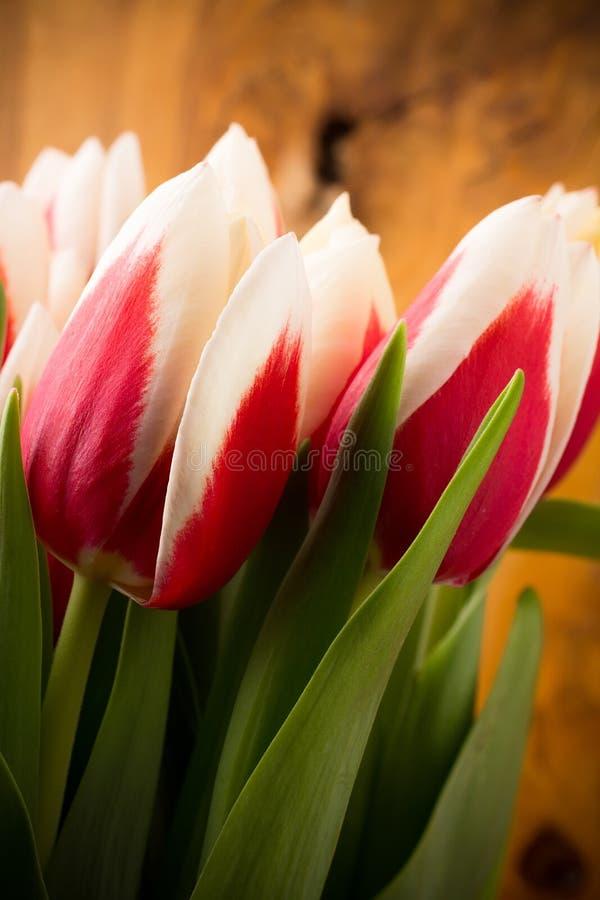 Download Tulipas. imagem de stock. Imagem de rosa, de, cores, estação - 29845629