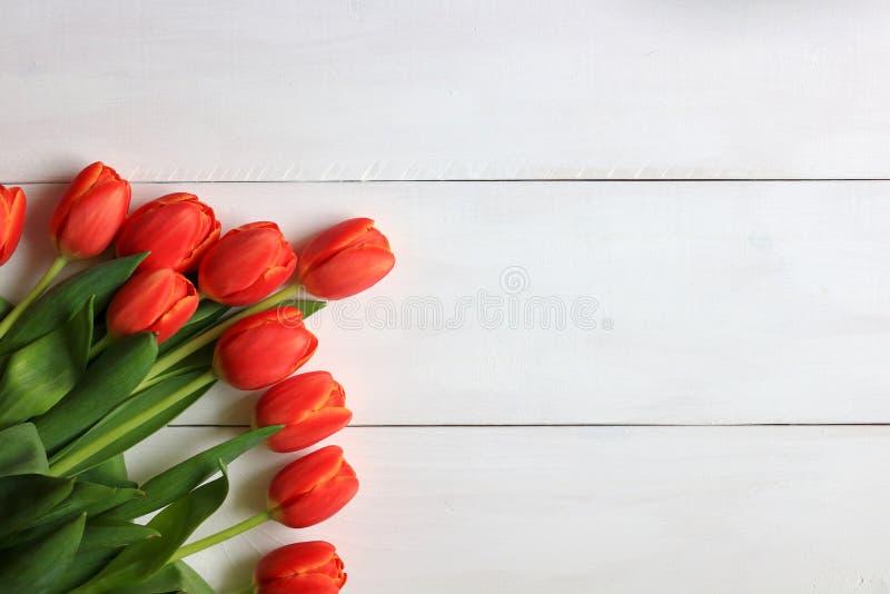 Tulipas alaranjadas indicadas em um fundo branco imagens de stock