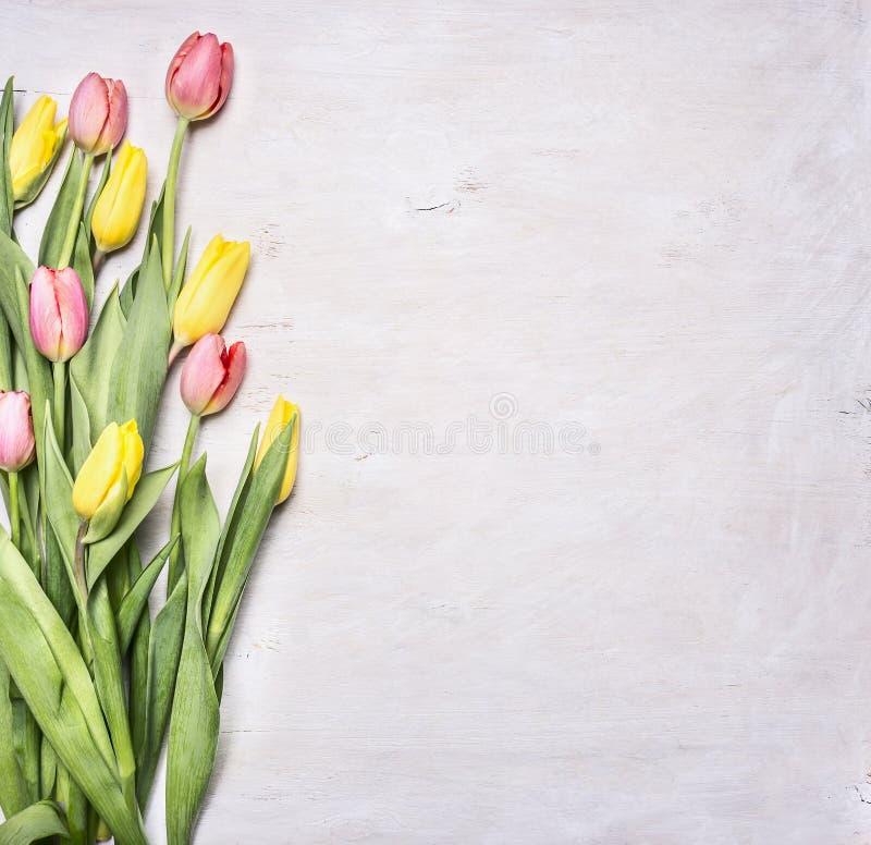 Tulipas amarelas, cor-de-rosa da mola, colocadas em uma beira de madeira branca do fundo, lugar para o fim rústico de madeira u d fotografia de stock