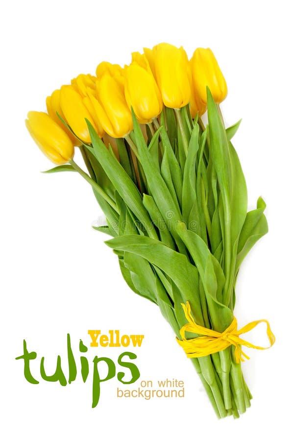 Tulipas amarelas em um branco imagem de stock