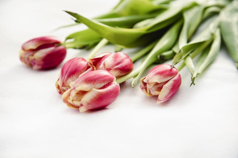 Tulipas amarelo cor-de-rosa do feriado e verde vermelhos fotografia de stock