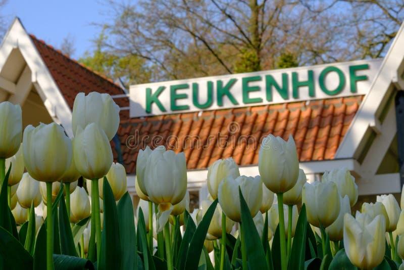 Tulipas brancas na frente do sinal em jardins de Keukenhof, Lisse de Keukenhof, Holanda sul fotos de stock royalty free