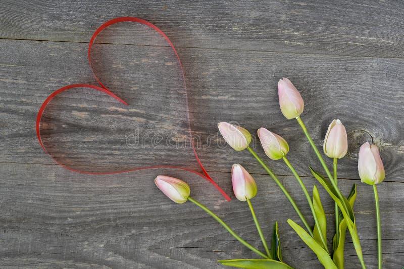 Tulipas com matiz cor-de-rosa com fita sob a forma de um coração da cor do coral de vida em um fundo de madeira do vintage foto de stock