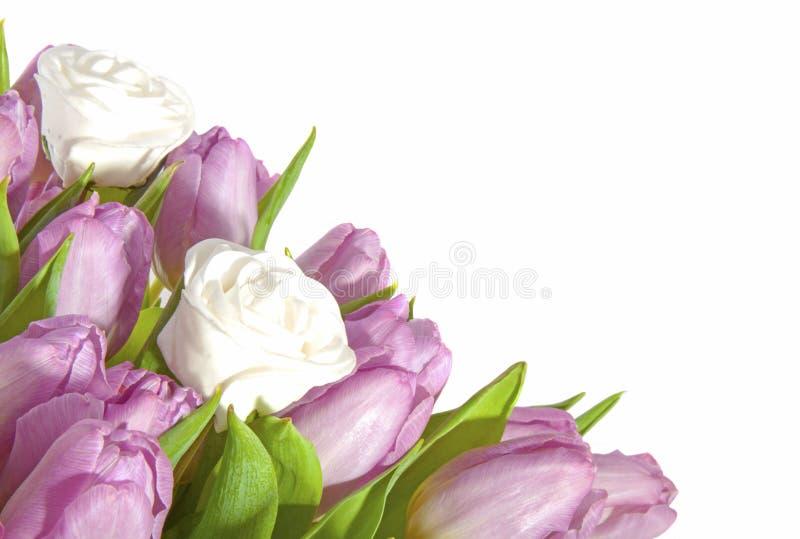 Tulipas cor-de-rosa e rosas brancas fotografia de stock royalty free