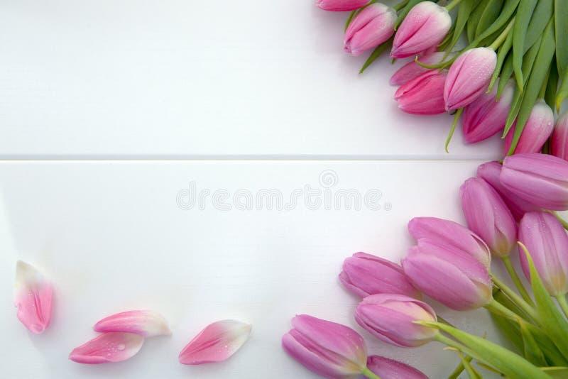 Tulipas cor-de-rosa isoladas no fundo de madeira branco Fundo das celebra??es fotografia de stock royalty free