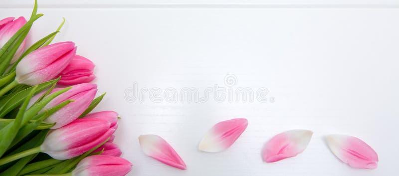Tulipas cor-de-rosa isoladas no fundo de madeira branco Fundo das celebra??es imagens de stock royalty free