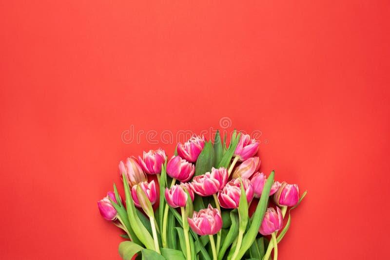 Tulipas cor-de-rosa vermelhas bonitas da peônia fotos de stock royalty free