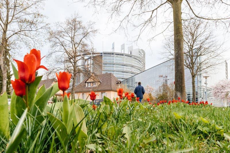 Tulipas da construção do Parlamento Europeu e da mola vermelha fotografia de stock royalty free