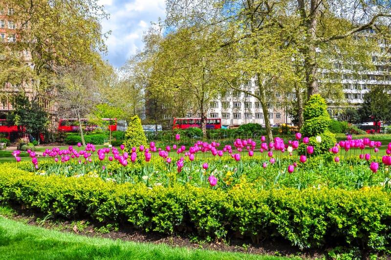 Tulipas da mola em um de jardins de Londres, Reino Unido fotos de stock