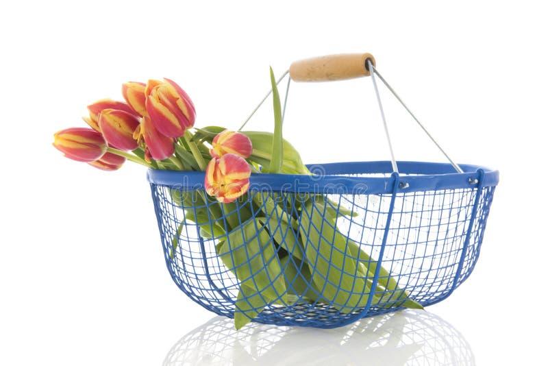 Tulipas do ramalhete na cesta azul imagem de stock