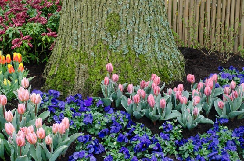 Tulipas e flores azuis pelo tronco de árvore foto de stock