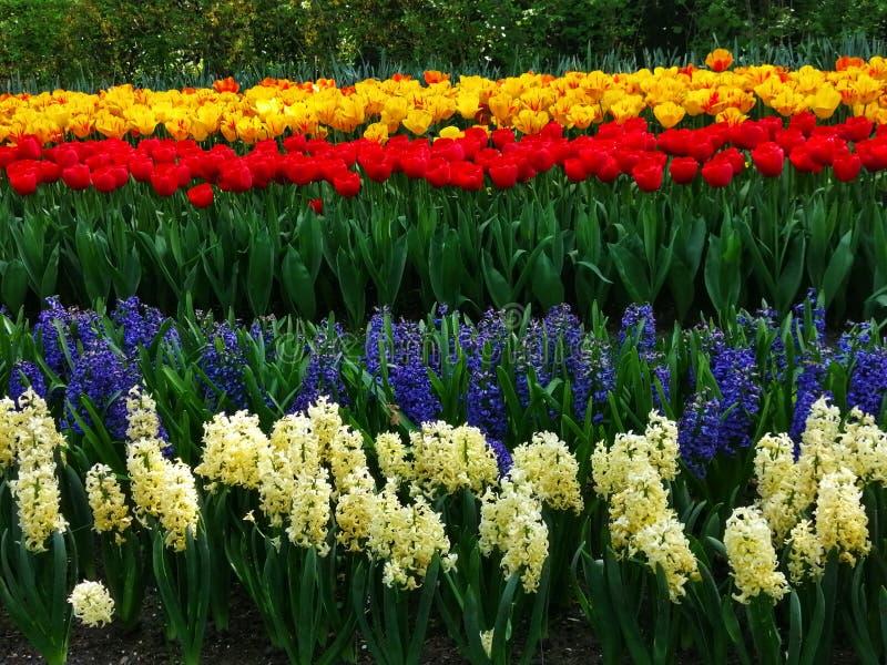 Tulipas e flores de Holland Keukenhof imagens de stock