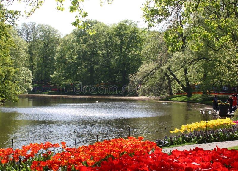 Tulipas em camas de flor pelo lago, jardins de Keukenhof imagem de stock