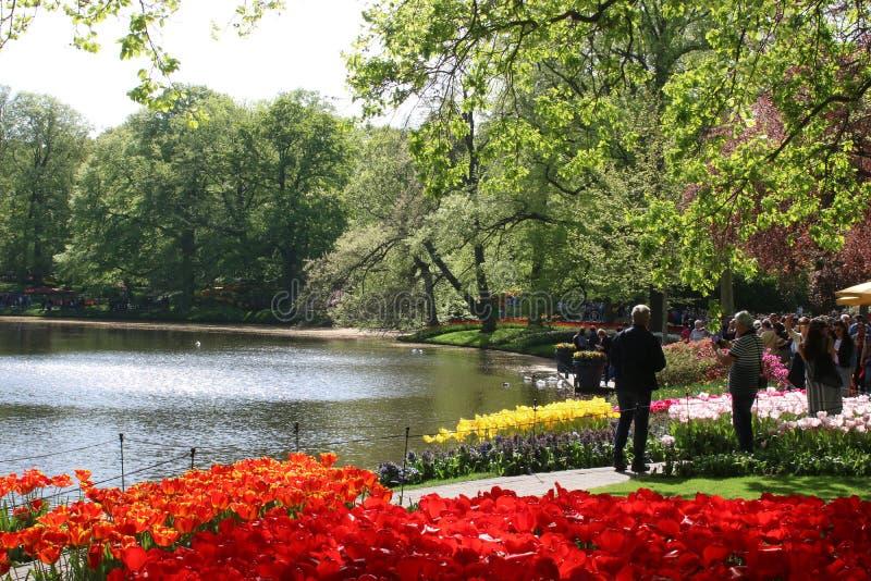 Tulipas em camas de flor pelo lago, jardins de Keukenhof imagem de stock royalty free