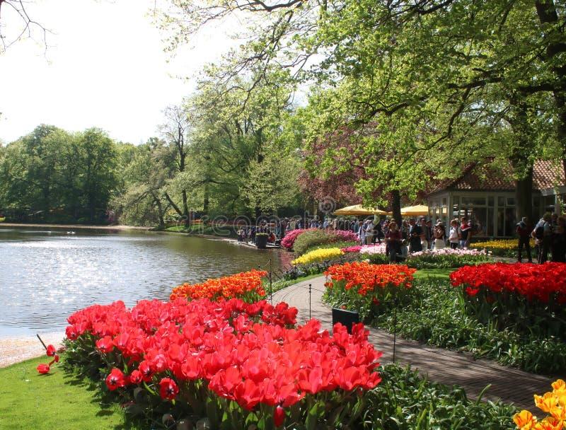 Tulipas em camas de flor pelo lago, jardins de Keukenhof imagens de stock royalty free