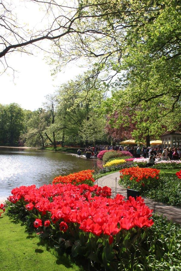 Tulipas em camas de flor pelo lago, jardins de Keukenhof fotografia de stock royalty free