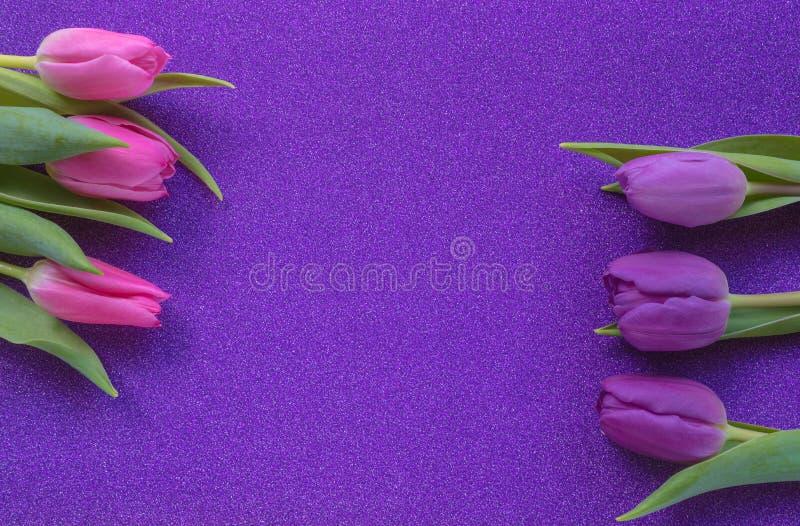 Tulipas roxas e cor-de-rosa no fundo roxo do brilho com espaço da cópia imagens de stock