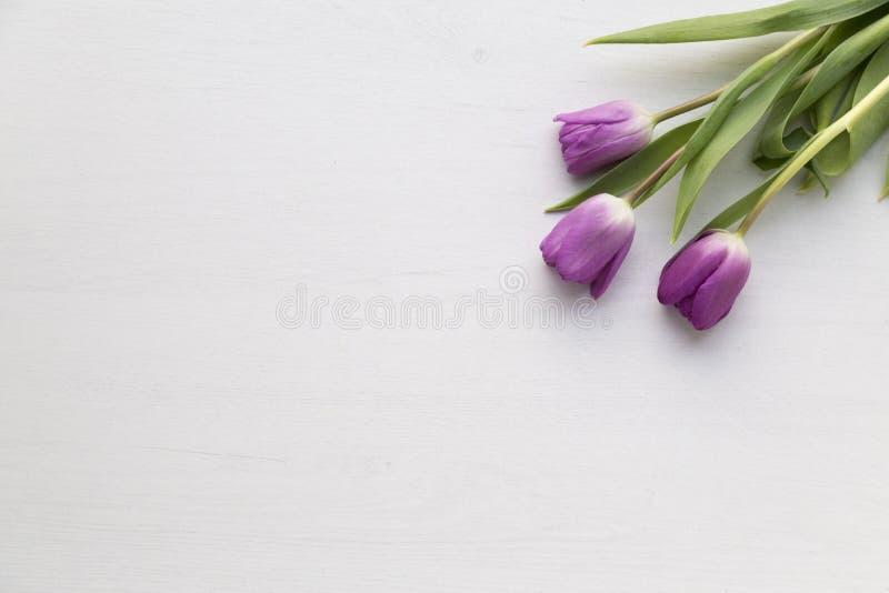 Tulipas roxas no fundo de madeira branco foto de stock