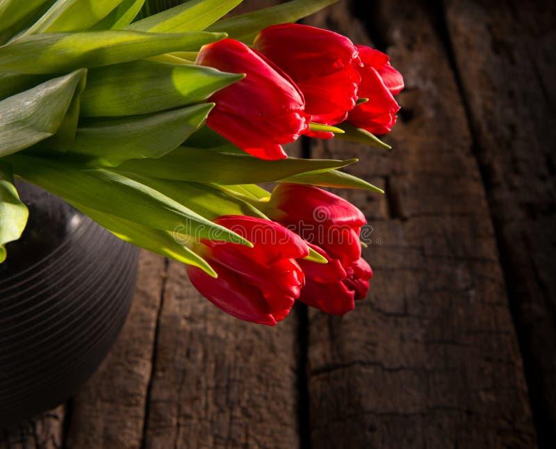 Tulipas vermelhas bonitas imagens de stock
