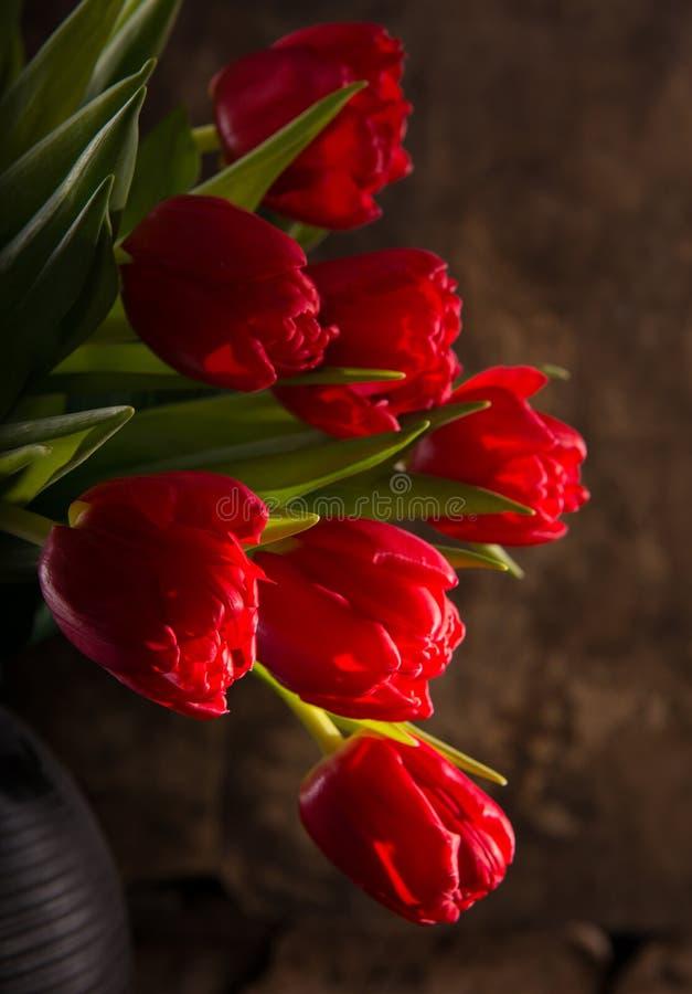 Tulipas vermelhas bonitas imagens de stock royalty free