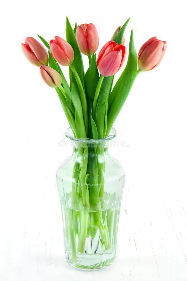 Tulipas vermelhas em um vaso no fundo branco foto de stock royalty free