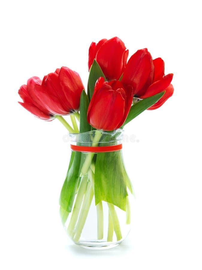 Tulipas vermelhas frescas fotografia de stock