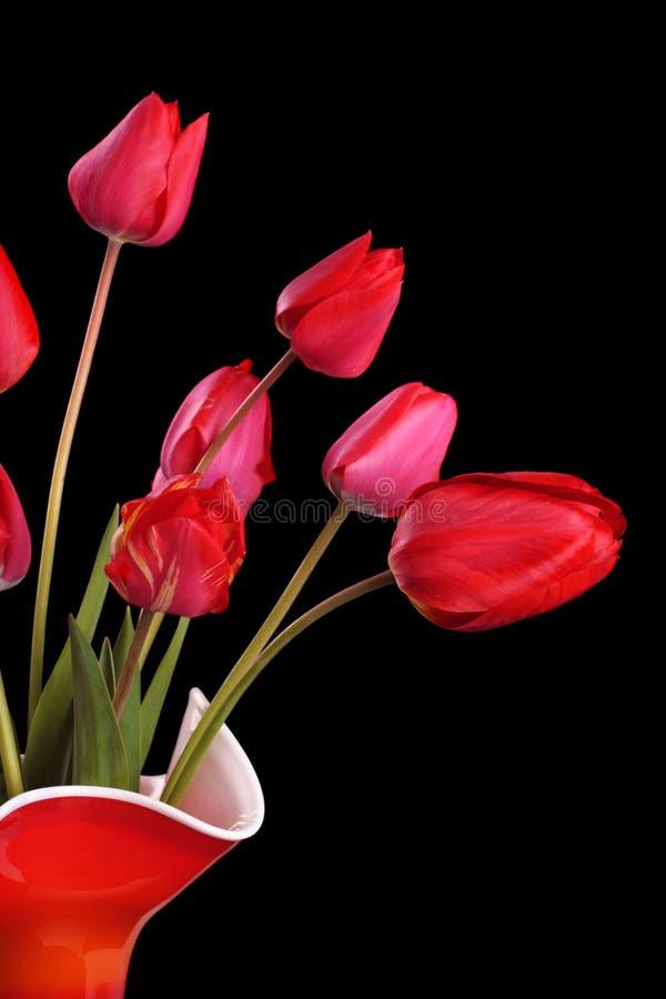 Tulipas vermelhas no preto fotografia de stock royalty free