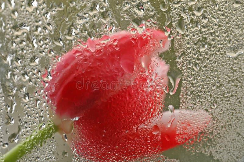 Download Tulipe photo stock. Image du été, ressort, wildflowers, rouge - 83694