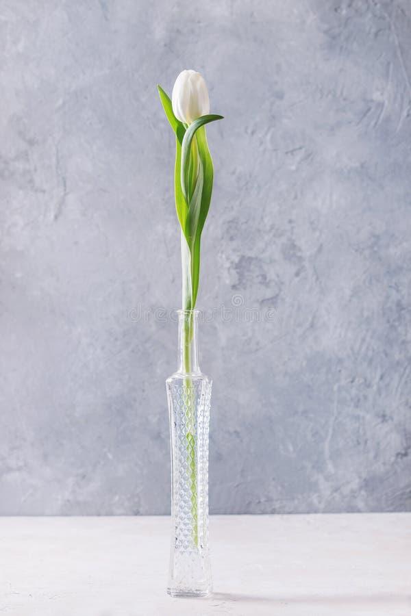 Tulipe blanche dans la bouteille image libre de droits