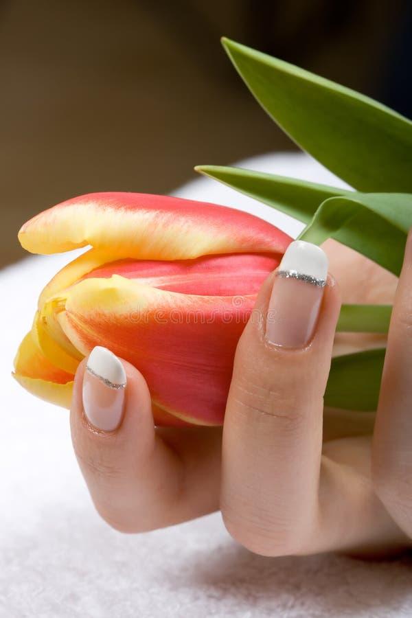 Tulipe chez des mains de la femme photographie stock libre de droits
