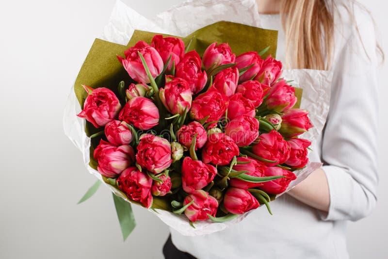 Tulipe cramoisie de beau bouquet avec chez la main de la femme fleur colorée de mélange de couleur photographie stock libre de droits
