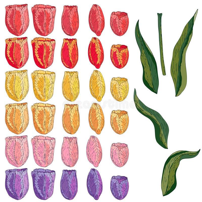 Tulipe d'isolement par vecteur sur le blanc illustration libre de droits