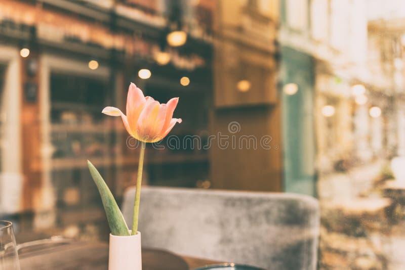 Tulipe dans un vase sur la table de café photographie stock libre de droits
