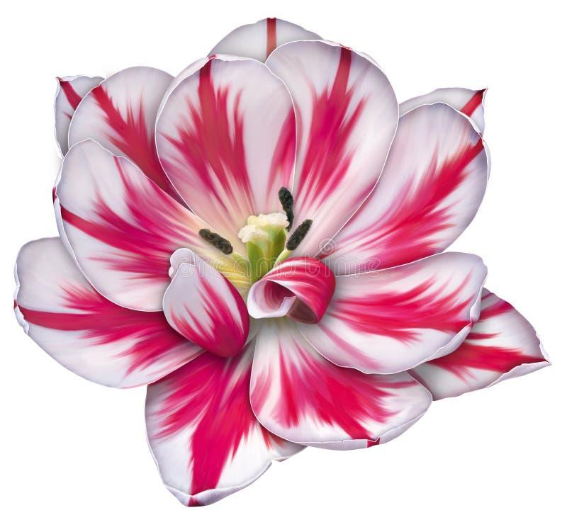 Tulipe de tabouret illustration libre de droits