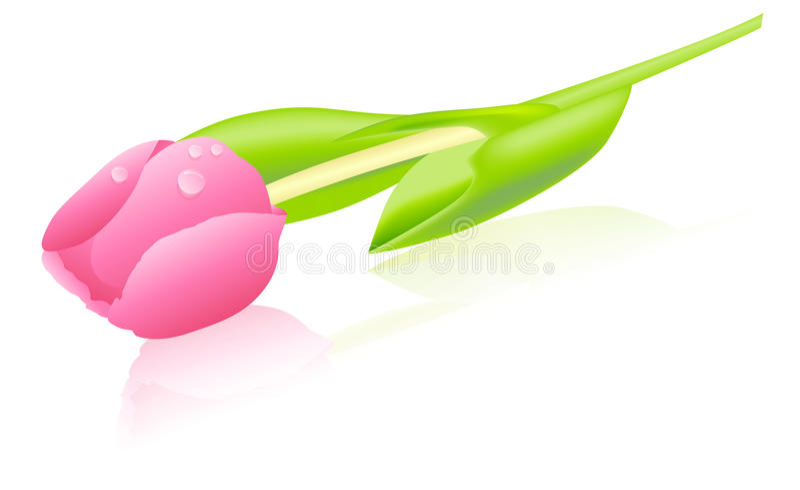 Tulipe rose - vecteur illustration de vecteur