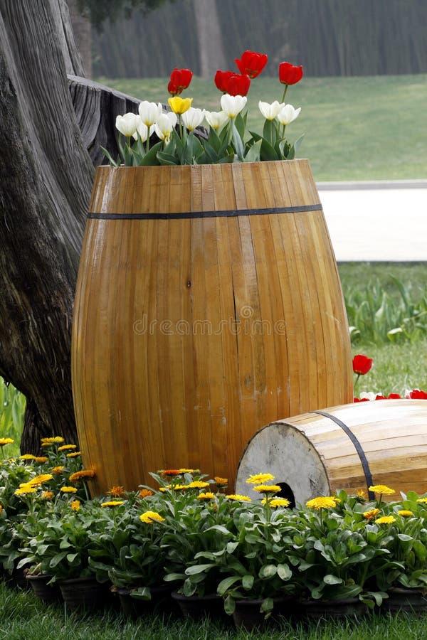 Tulipe sur le tonneau en bois photographie stock