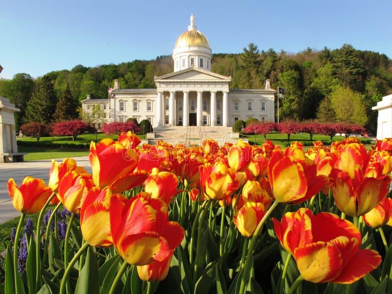 Tulipes à la Chambre d'état du Vermontn photographie stock