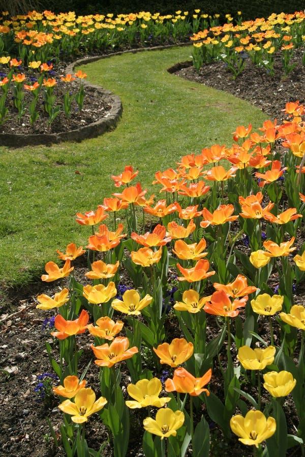 Download Tulipes photo stock. Image du vert, festival, couleur, onde - 725206